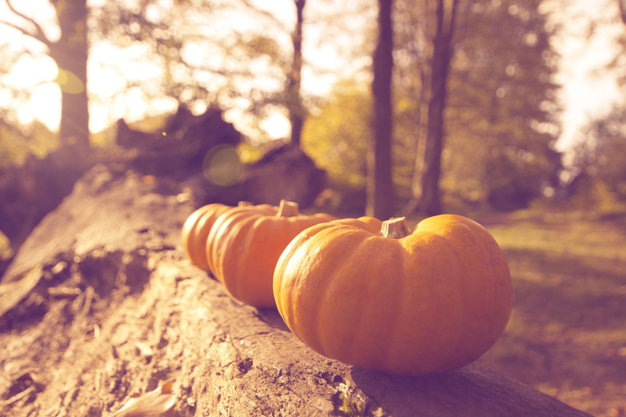 Best ideas about fall backgrounds tumblr on pinterest fall