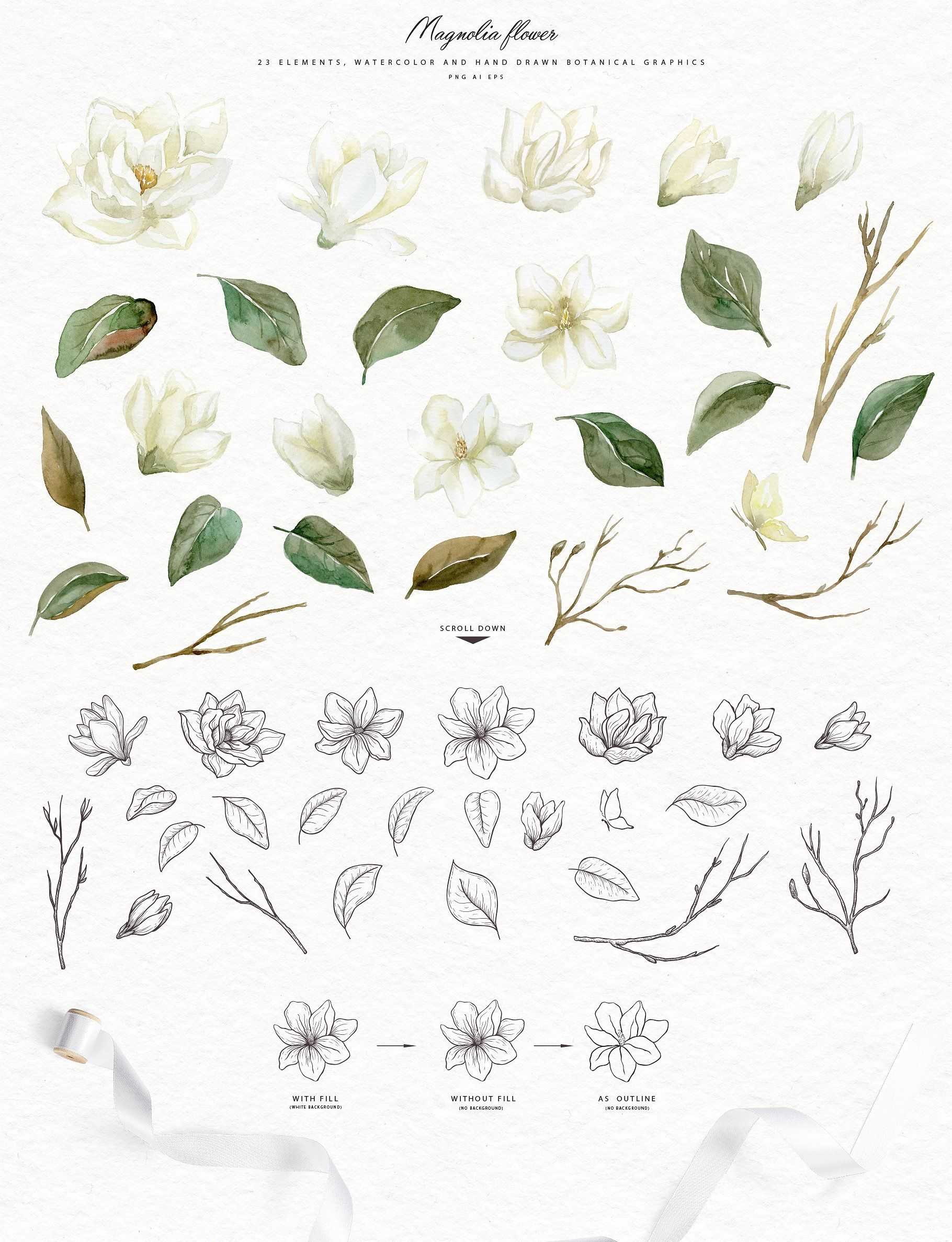 White Magnolia And Cotton Greenery Floral Watercolor White Magnolia Magnolia Paint