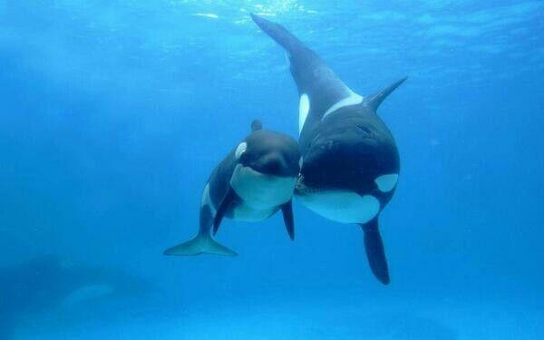 Mum & baby whales~