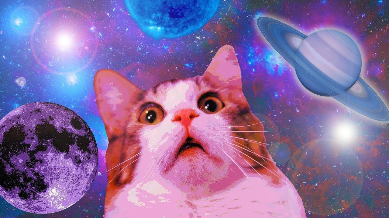 11 MIN OF DANK CAT MEMES Funny cat wallpaper