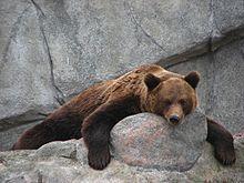 Korkeasaari, Suomi [Helsinki Zoo, Finland]
