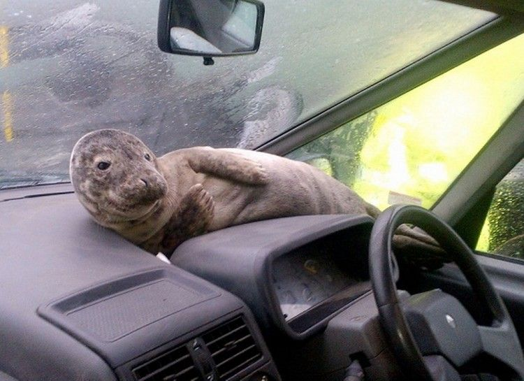 17 Animals Being Total Bros Seal pup