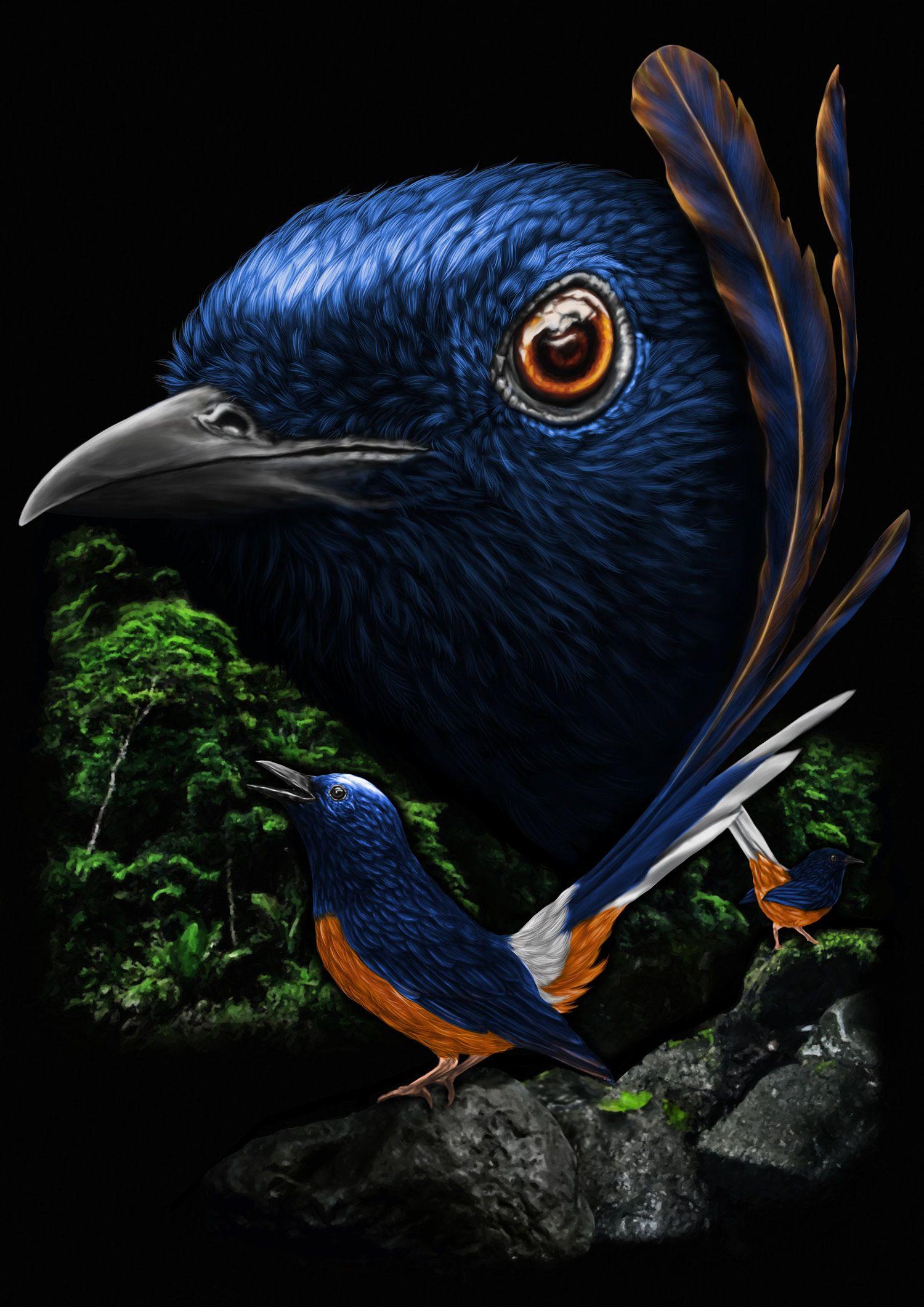 Murai Batu Birds Binatang Hewan Murai