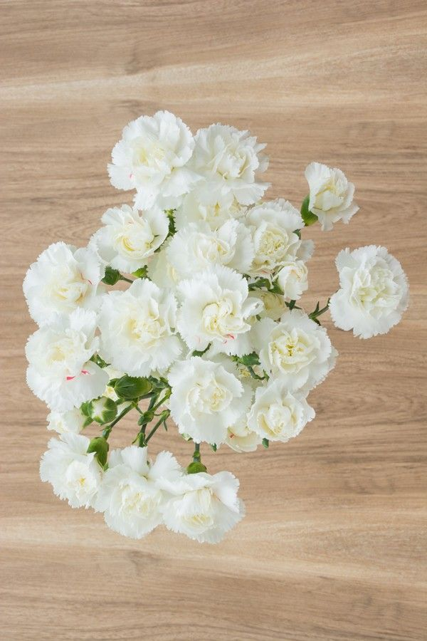 White Mini Carnations Mini Carnations Carnation Wedding Flowers Carnations