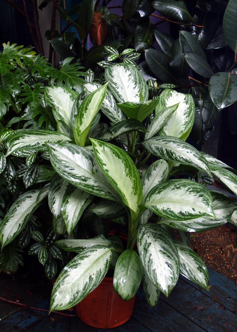 Indoor Plants For Low Light Plants Indoor Tropical 400 x 300