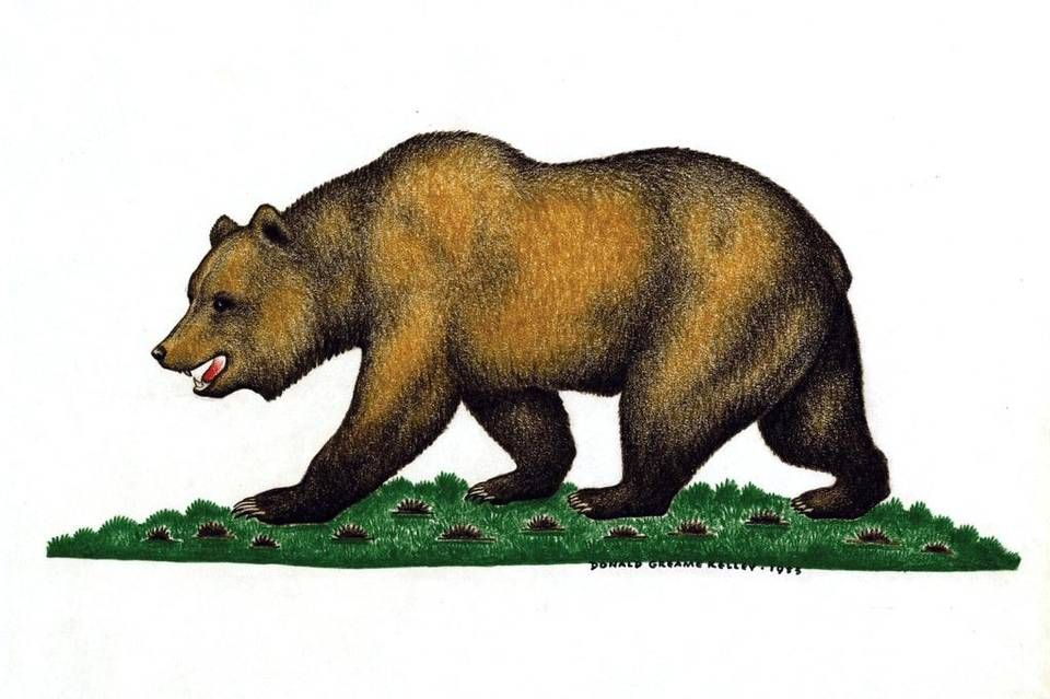 A Missing Mascot Californians Mourn The Grizzly Mull Its Return Grizzly Bear Bear Grizzly