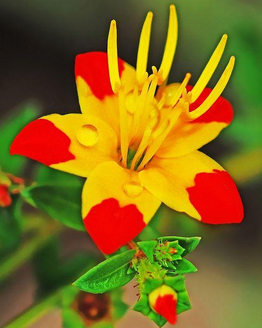 Bandera de espana con flores