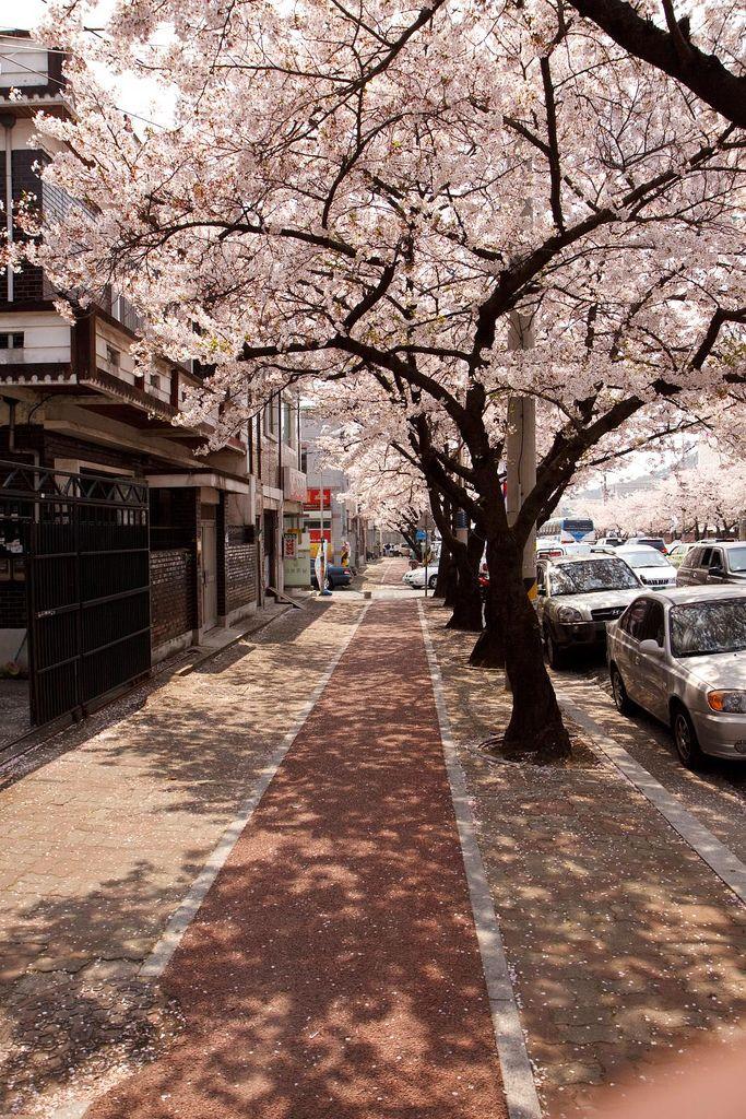 꽃샘추워: Korea