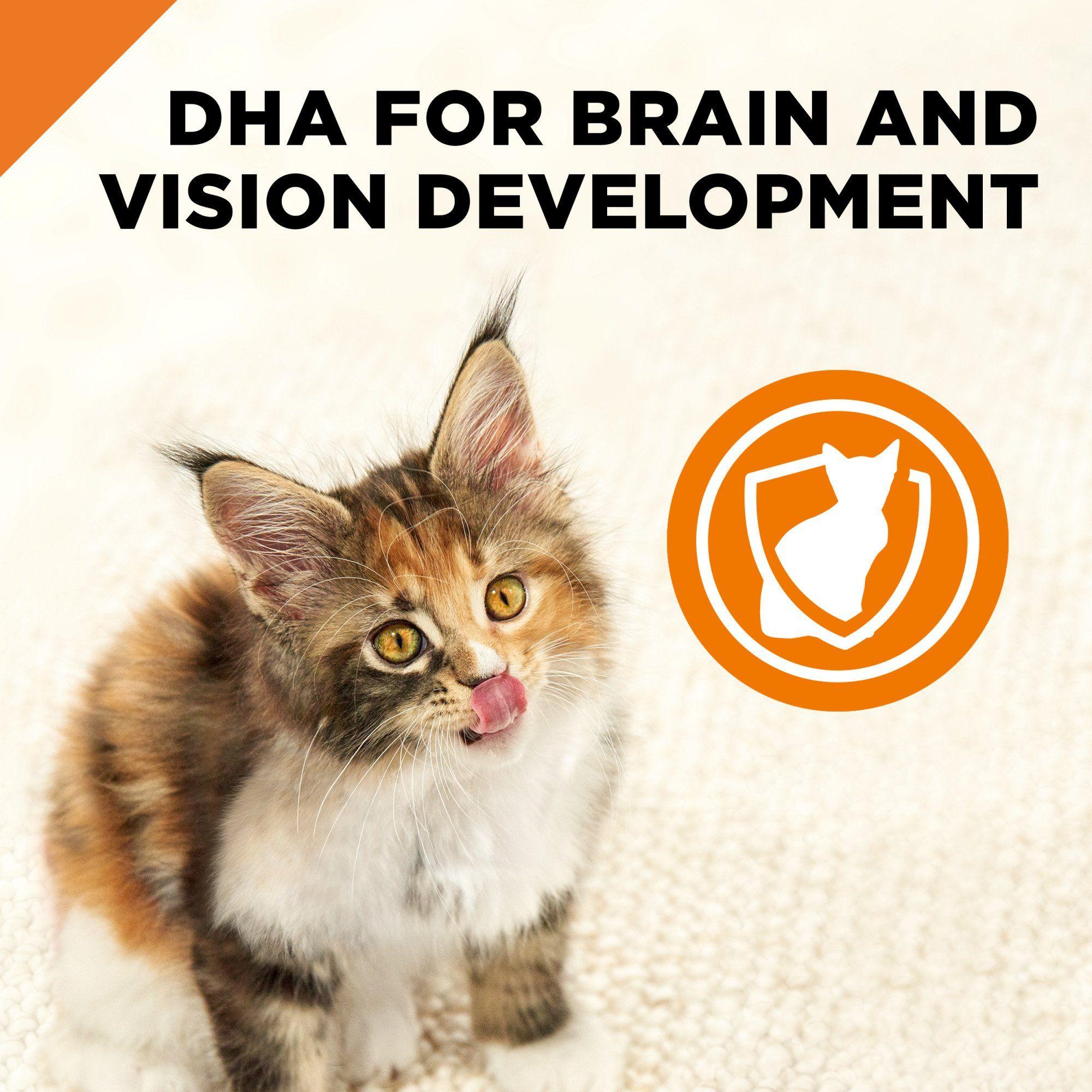 Purina Pro Plan Savor Shredded Blend Chicken Rice Formula Probiotics Dry Kitten Food 3 Lbs Kitten Food Wild Bird Food Kittens