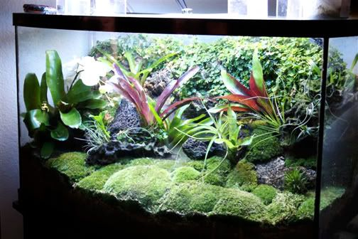 Frog and fish tank google search vivarium pinterest for Fish tank frogs