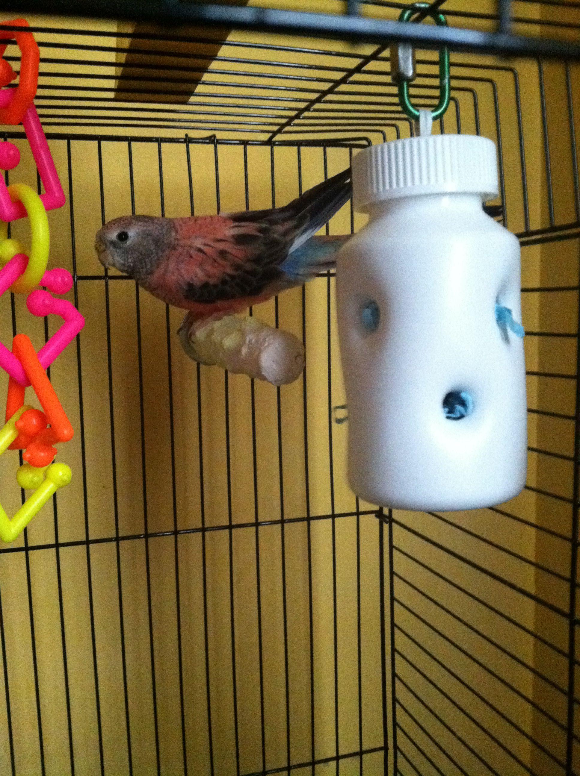 8 beaks bird toys