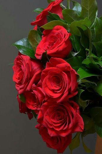 Resultado de imagem para imagens google de flores