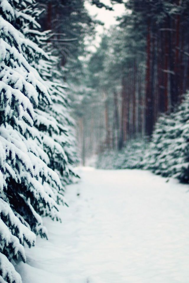 640-Landscapes-Winter-Snow-l