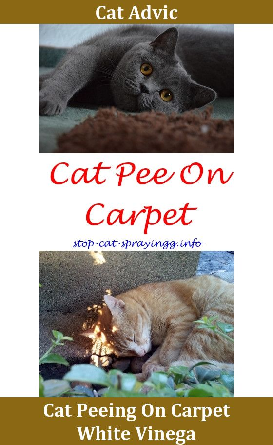 Cat Spray Life Cat Pee Male Cat Spraying Cats