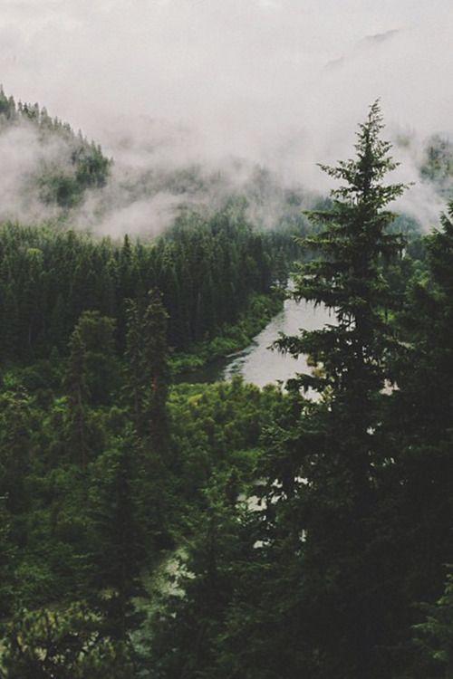 Bosques Tumblr Buscar Con Google Fotografia De Naturaleza Paisajes Fotografia De Bosque
