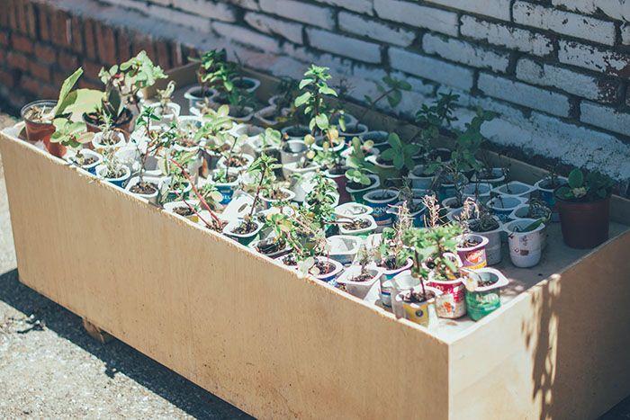 jardin vertical y huerto urbano cole-15