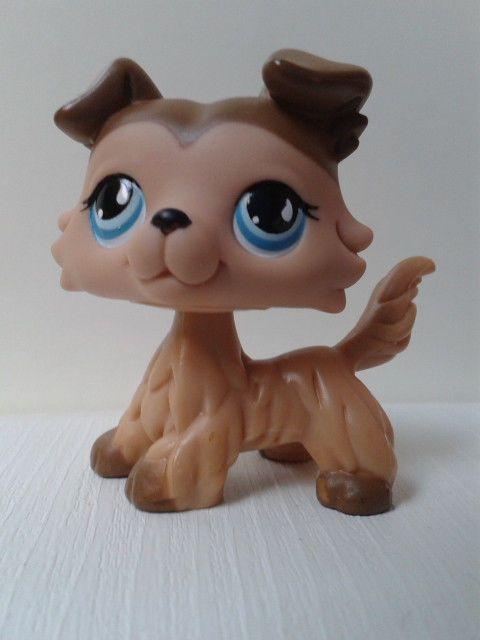 Lps Littlest Pet Shop Collie Dog 893 With Images Lps Littlest