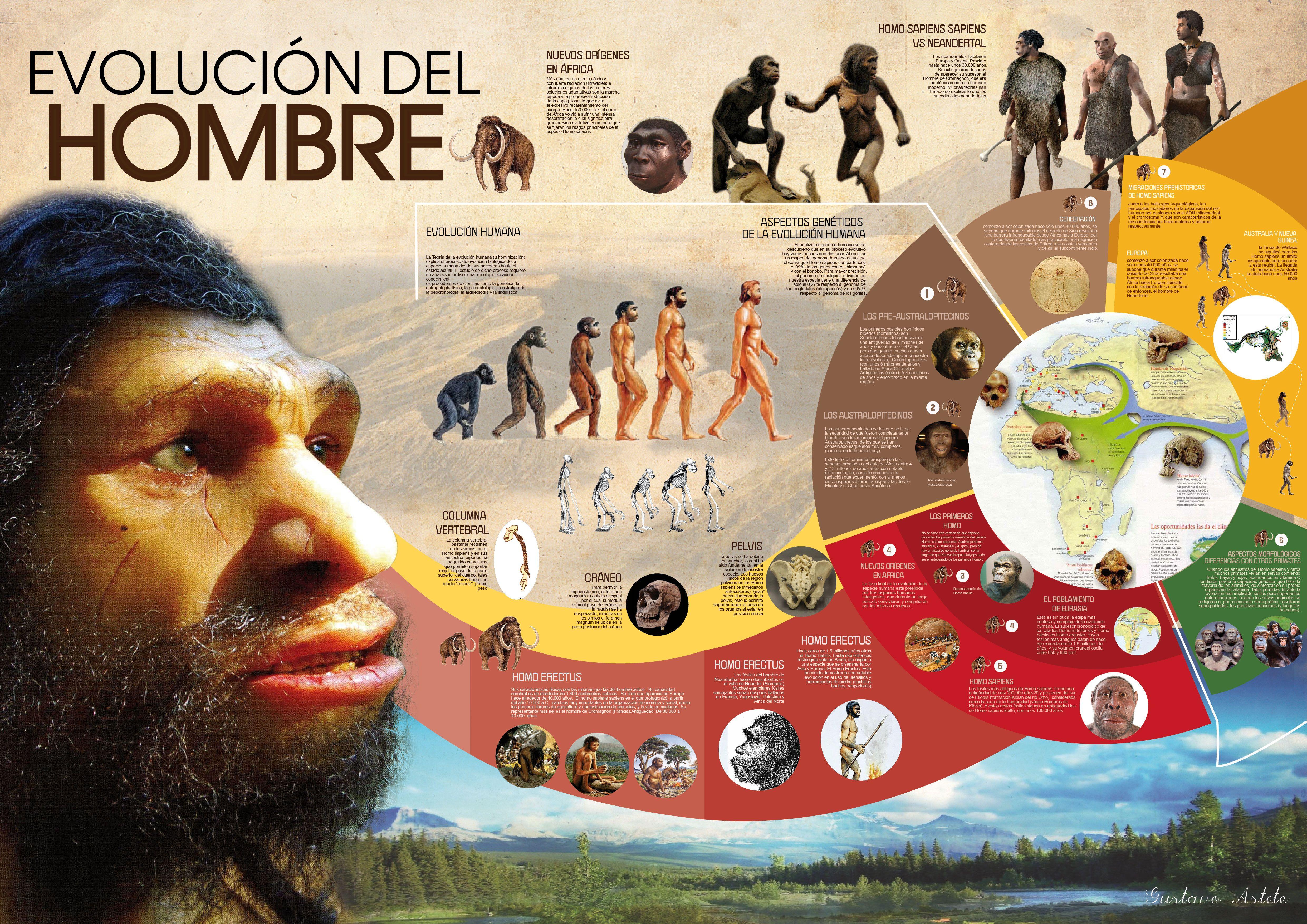 infografía evolución del hombre   Diseño   Pinterest   Evolución, De ...