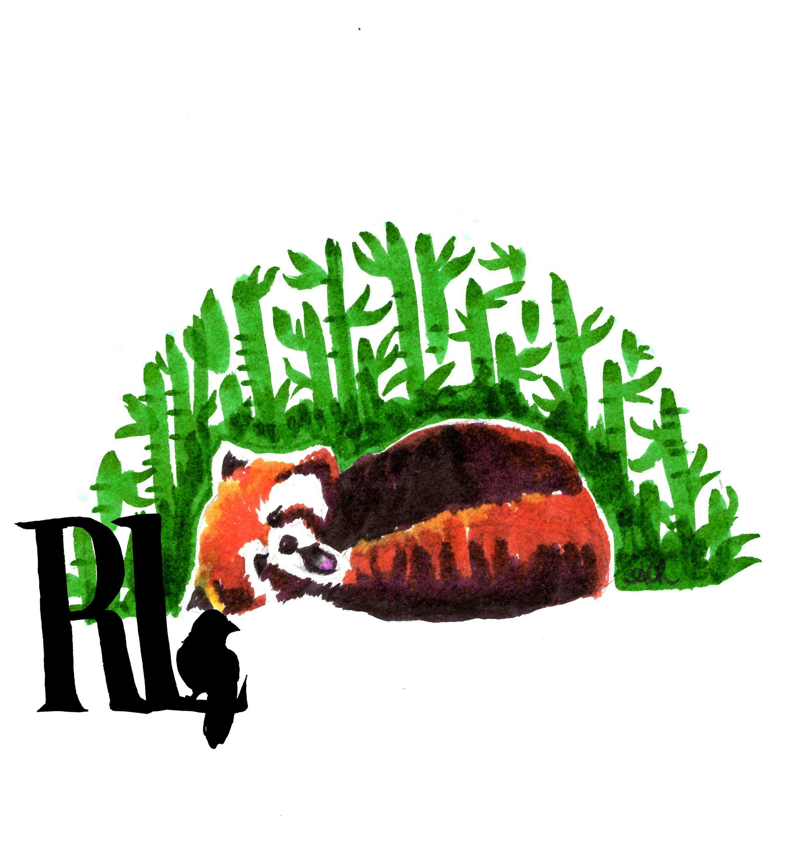 Yawning Cute Red Panda Fine Art Giclée Print