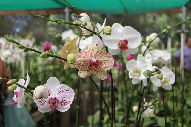 Hawaii Orchid Nursery Tour With Images