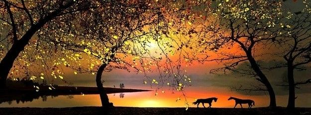 Horses During Beautiful Sunset Facebook Cover Beautiful Nature Nature Pictures Beautiful Sunset