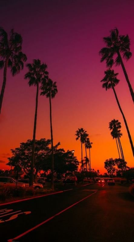 Best Palm Tree California Beach Sky 57 Ideas Tree With Images