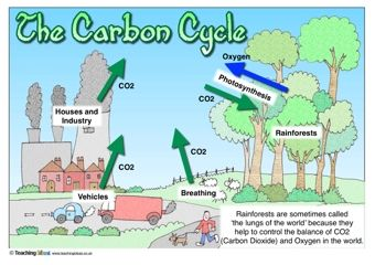 The carbon cycle cycling science resources and environmental science the carbon cycle ccuart Choice Image