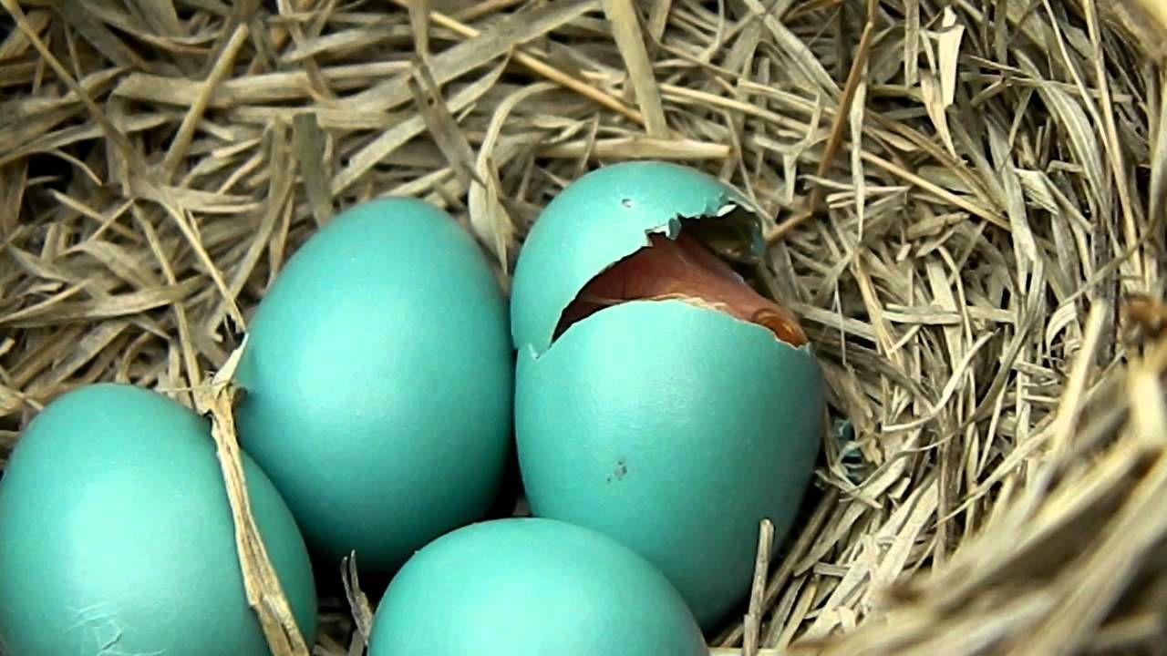 baby bird hatching it u0027s miraculous every time birds