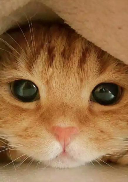 Sweet with beautiful Big eyes