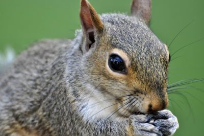 An apartment complex has set up traps to kill squirrels as a means of population control. Not only is this cruel, but it is also ineffective. Sign this petition and demand the apartment complex get rid of these traps.