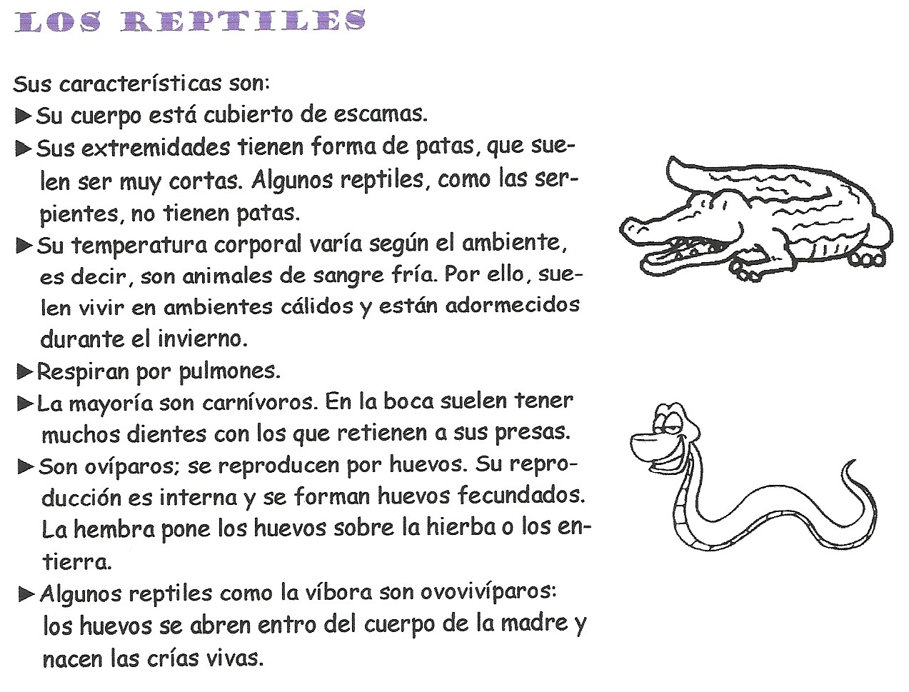 Imagen relacionada  ANIMALES VERTEBRADOS  Pinterest