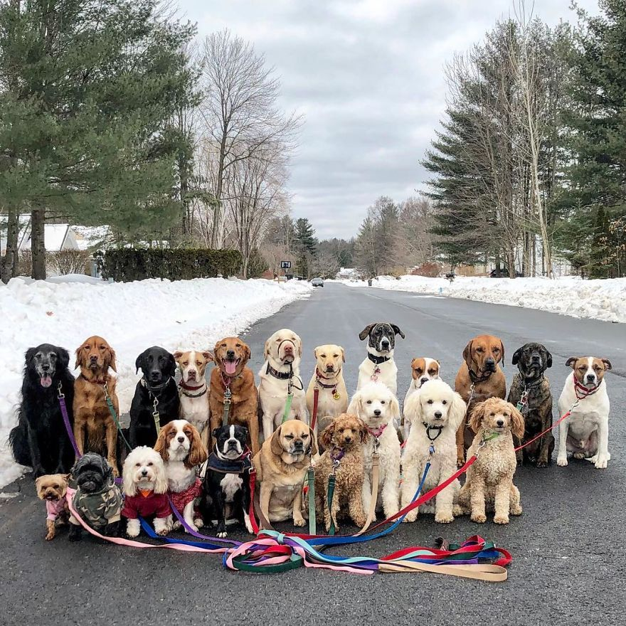 These Lovely Dogs Pack Walk And Pose For Pictures Together Every
