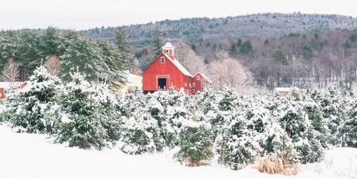 Christmas Tree Farms Near Me 30 Best Christmas Tree