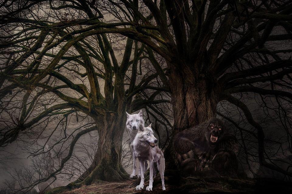 таинственная фото волка позволят