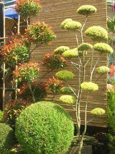 Captivating My Zen Garden On Pinterest | Japanese Gardens, Zen Gardens And .