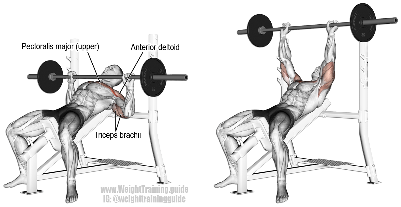 Incline Barbell Bench Press Instructions And Video Weight Training Guide Chest Workouts Best Chest Workout Bench Press