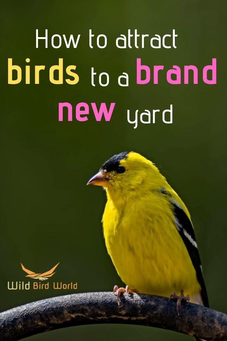 Pin On Ornithologist Heaven