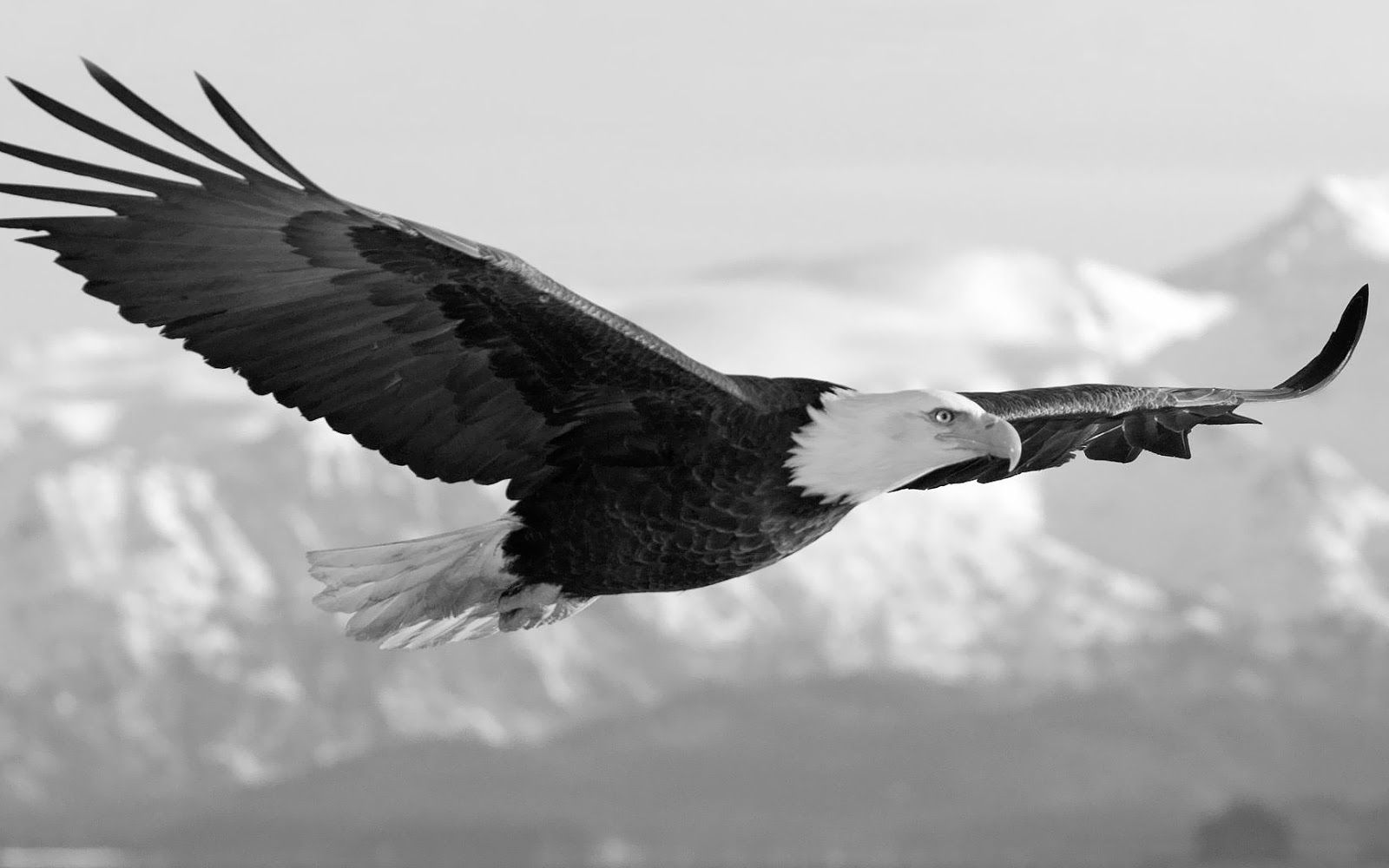 Bald eagles are capable of seeing fish in the water from several hundred feet above while soaring gliding or in flapping flight