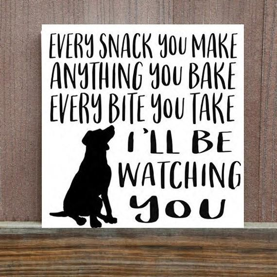 Dog Sign Dog Quote Pet Sign Every Snack You Make Sign | Etsy