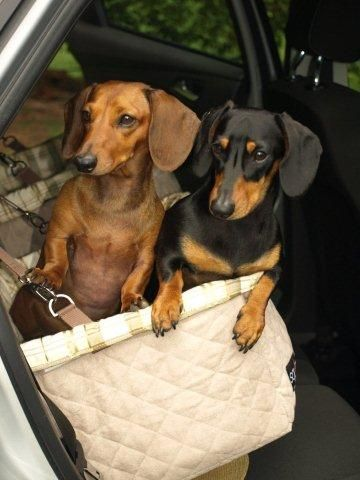 Dachshund Car Booster Seat | Pets | Pinterest | Dachshunds, Cars and