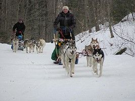 Valley Snow Dogz - Dog Sled Rides and Sled Dog Tours in New Hamsphire!