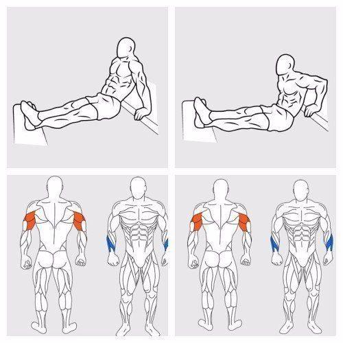 Упражнения на мышцы тела в картинках