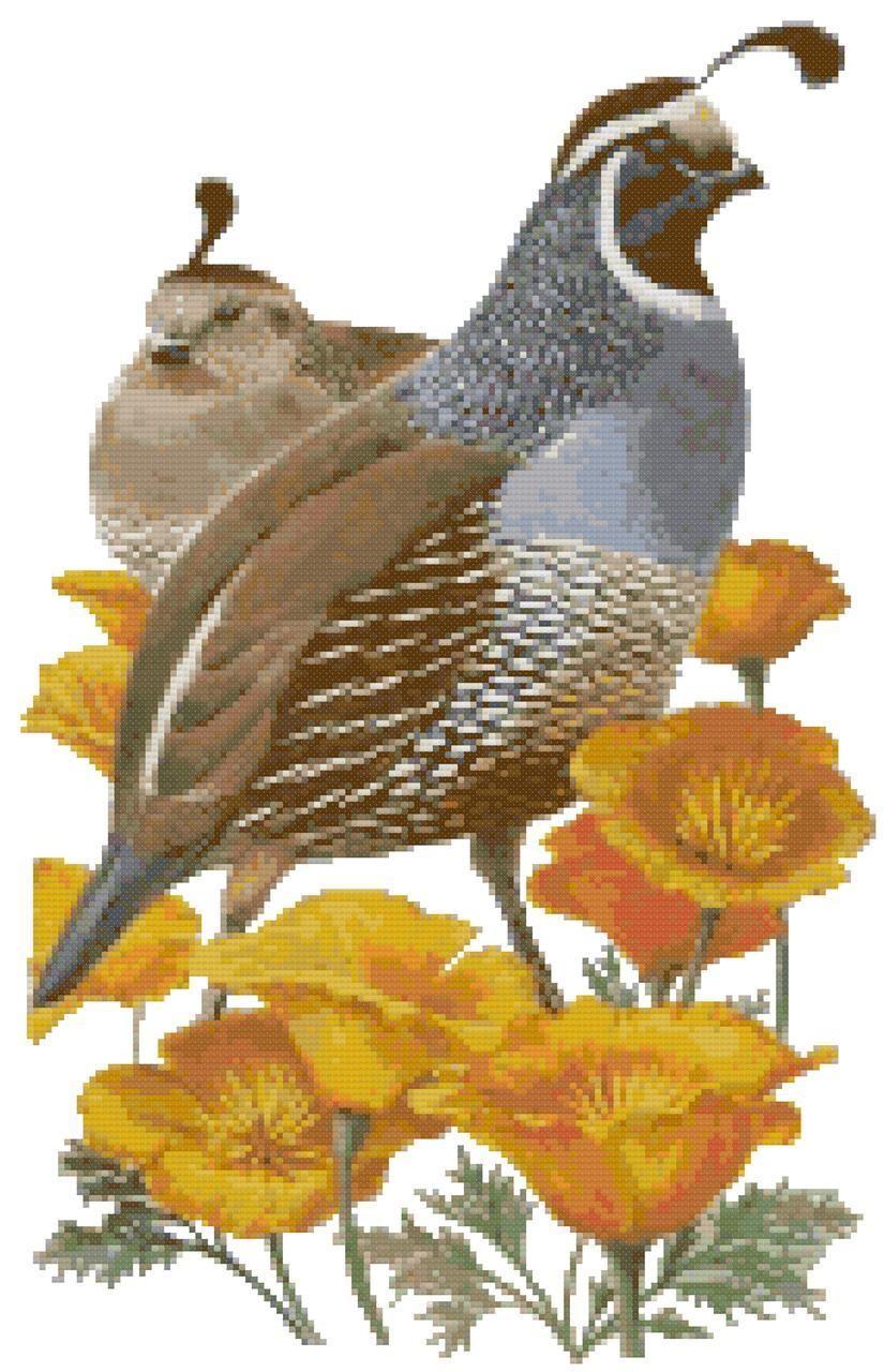 California state bird and flower california valley quail