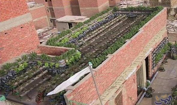 إطلاق مشروع زراعة أسطح المنازل للمرة الأولى في محافظة سوهاج