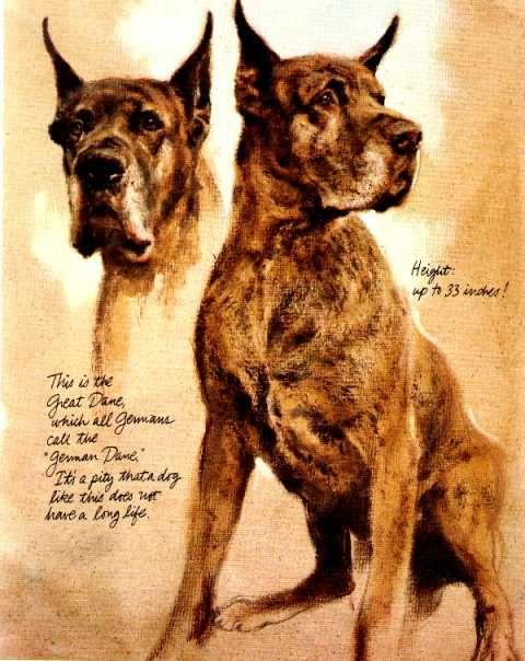1983 Illustration By Rien Poortvliet Dog Print Art Dog Art