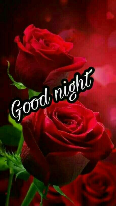 Good Night Roses Days And Nights Pinterest Flowers Red Roses