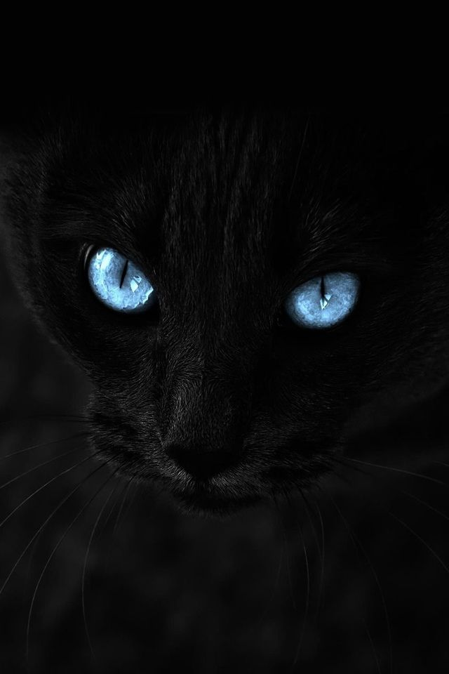 Black Cat Iphone Wallpaper Apple Iphone Cats Cat With Blue Eyes