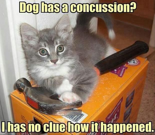 Nice Funny Animals Wallpapers Dog Has A Concussion