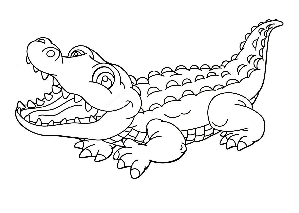jivotnie-avstralii-raskraski-14.jpg (1200×858)   животные   Pinterest