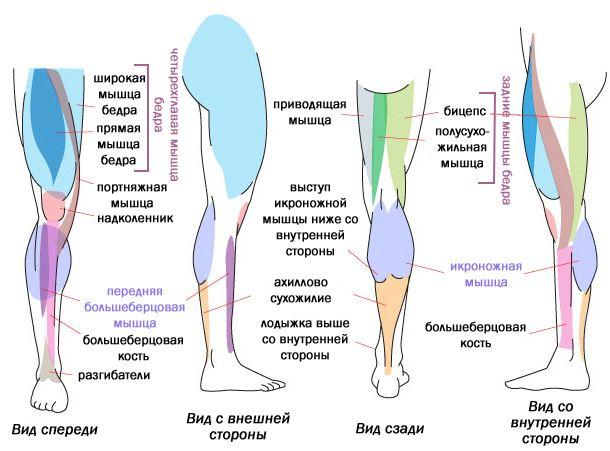 решено. болит мышца ноги ниже колена сзади рекомендовать